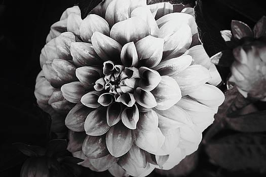 Bloomed by Bailey Pedersen