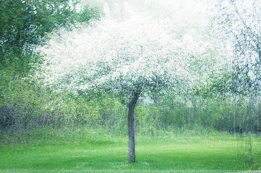 Blooming by Angela King-Jones