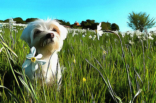 BLOOMING DAFFODILS IN THE ANTOLA PARK WITH MALTESE I paint by Enrico Pelos