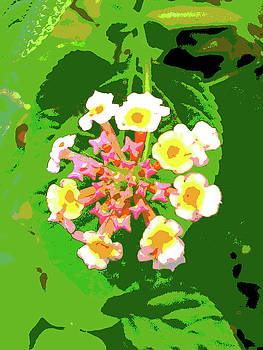 Blooming by Farah Faizal