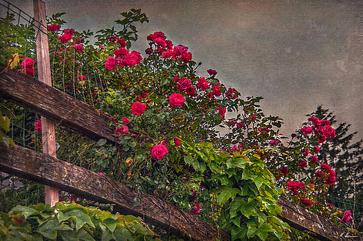 Blooming Fence by Hanny Heim