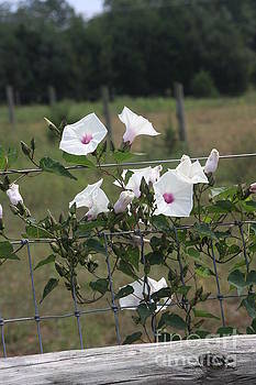 Blooming Fence by Wendy Coulson