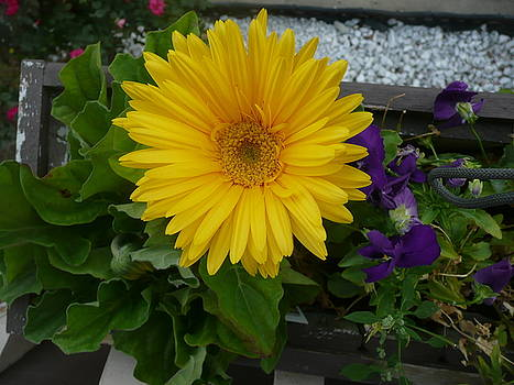 Blooming Flower by Barb Montanye Meseroll