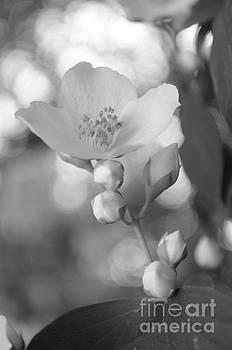 Blooming In Love by Eva Maria Nova