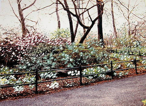 Blooming in the Park by Ruth Devorah