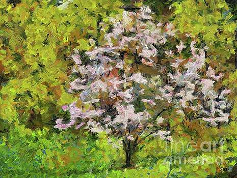 Blooming Magnolia by Dragica Micki Fortuna