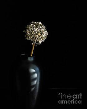 Blooming Onion by Linda Hoye