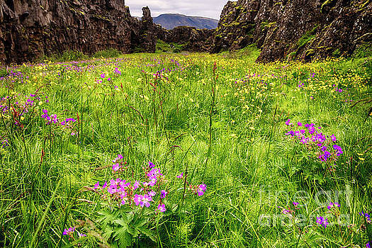 Blooming Purple and Yellow Wildflowers in a Canyon by George Oze