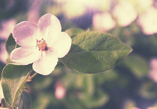 blooming quince by Iuliia Malivanchuk by Iuliia Malivanchuk