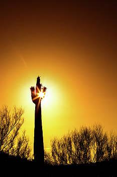 Blooming Saguaro Cactus at Colorful Sunset by Susan Schmitz
