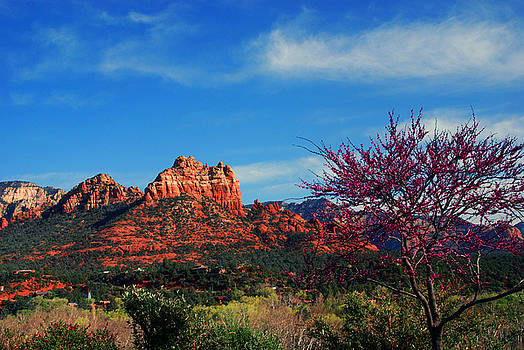 Susanne Van Hulst - Blooming tree in Sedona