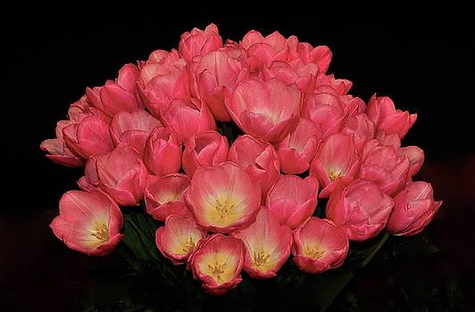 Blooming Tulips by Mark Lemon
