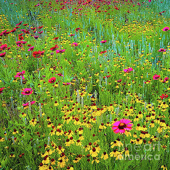 Blooming Wildflowers by D Davila