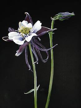 Barbara Keith - Blossom