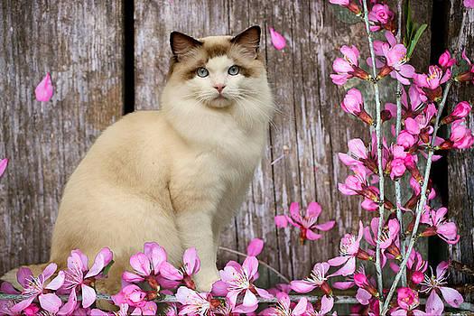 Blossom by Cynthia Leaphart