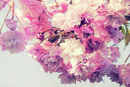 Blossom haze by Susan Tinsley