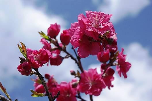 Blossom by John Conrad Johnson III