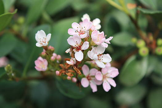 Blossom by Kristina Randal