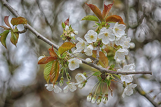 Blossom by Luke Aldington