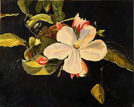Blossom by Margaret Farrar