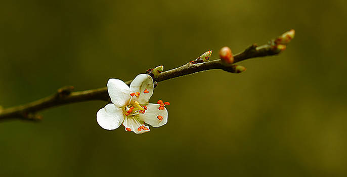 Blossom by Nataly Rubeo