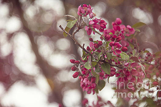 Blossom Out by Audrey Wilkie