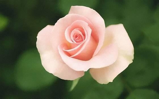 Blossom Pink Rose by Subesh Gupta