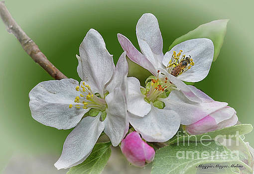 Blossom Time by Maggie Magee Molino