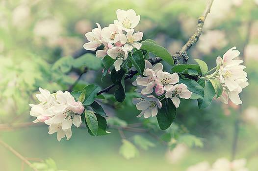 Blossom White by Luke Aldington