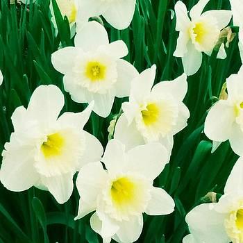 Blossomed beauty by ONDRIA-UNIqU3-Pics- Admin