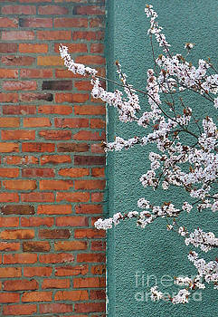 Blossoming in Spring 2 by Tin Tran