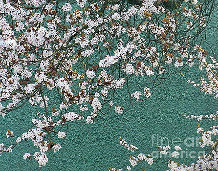 Blossoming in Spring by Tin Tran