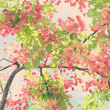 Blossoming Pink Shower Tree - Hipster Photo Square by Charmian Vistaunet