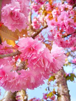 Barbara  White - Blossoms