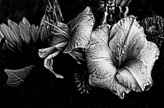 Blossoms, black and white. by Bill Jonscher