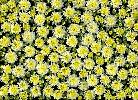 Blossoms by Christian Slanec