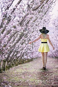 Blossoms Falling Like Snow by Evelina Kremsdorf
