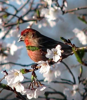 Angela Davies - Blossoms For Brunch