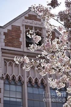 Blossoms in front of Building by Sylvia Blaauw