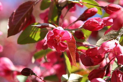 Blossoms by Wendy Munandi