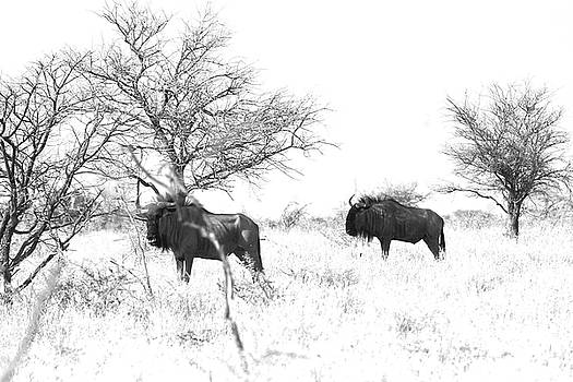 Blou wildebeest by Jaqueline Briel