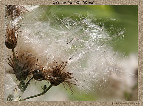 Blowin In the Wind by John Holloway