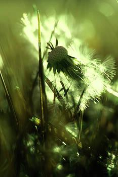 Blowin  in the wind by Angela King-Jones