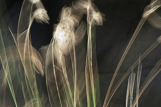 Roger Mullenhour - Blowing in the Wind
