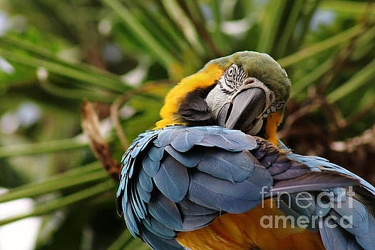 Blue and Gold by Denise Irving