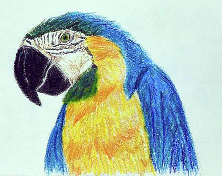 Blue and Gold Macaw Portrait by Lisa Von Biela