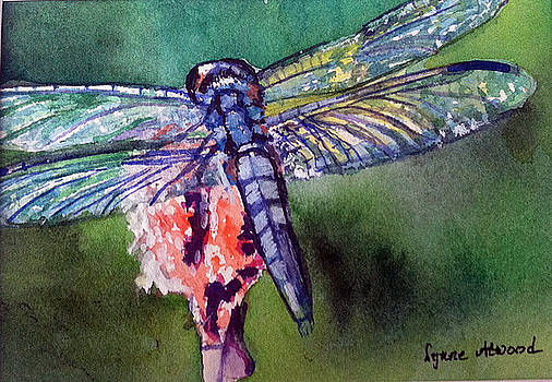 Blue and Green Dragonfly by Lynne Atwood