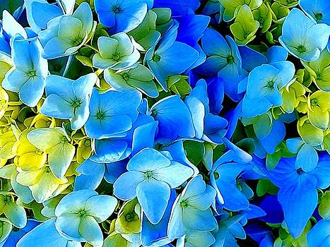 Colin Drysdale - Blue And Green Flowers
