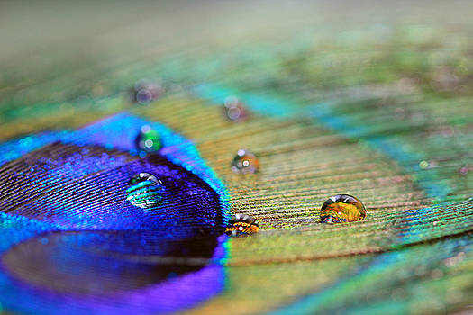 Angela Murdock - Blue and Orange Water Drops