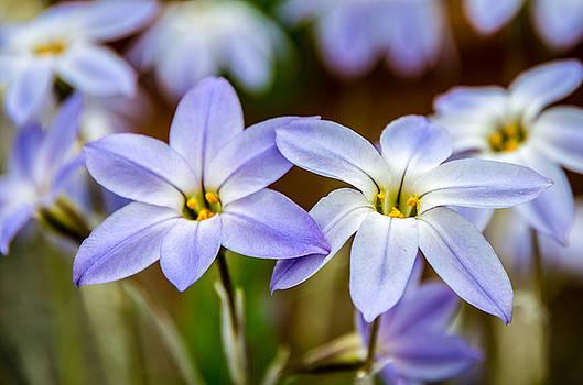 Martina Fagan - Blue and White Flowers
